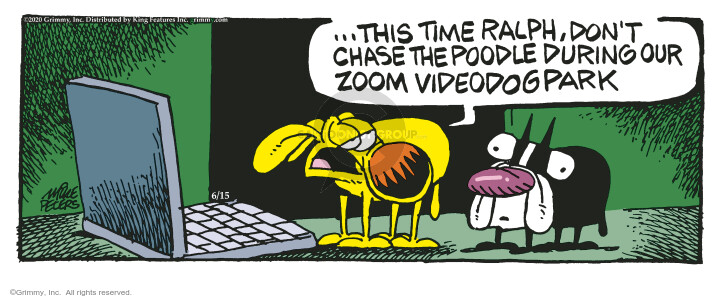 … This time Ralph, dont chase the poodle during our Zoom videodogpark.